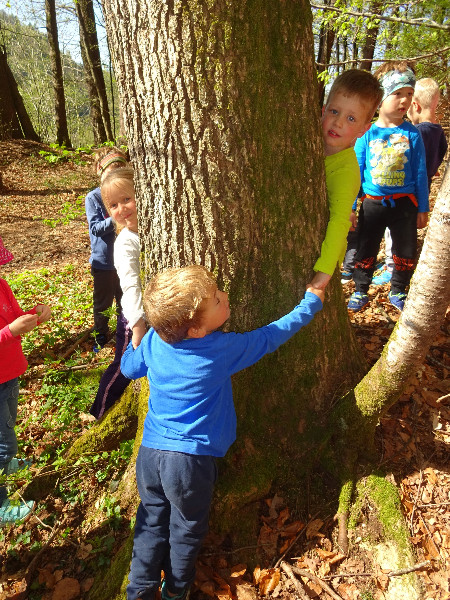 obseg-drevesa