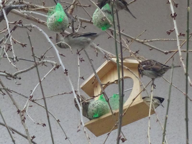 skrb-za-ptice
